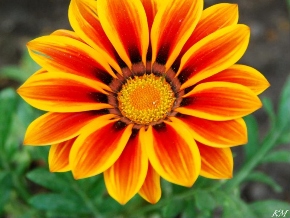 Виды симметрии в растениях. Центральная симметрия — при повороте вокруг точки...