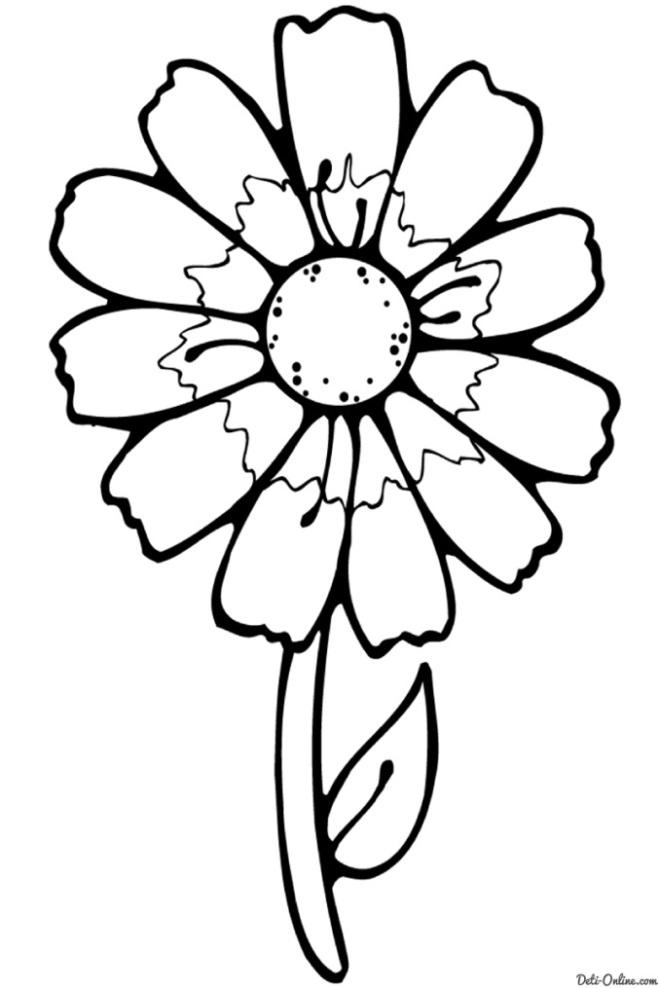 Раскраска Простая ромашка Раскраски Цветы