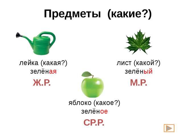 Предметы (какие?) лейка (какая?) зелёная лист (какой?) зелёный яблоко (какое?...