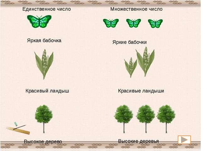 Яркая бабочка Яркие бабочки Красивый ландыш Красивые ландыши Высокое дерево...