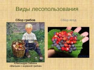 Виды лесопользования Сбор грибов Сбор ягод Александра Сайкина «Мальчик с корз