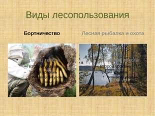 Виды лесопользования Бортничество Лесная рыбалка и охота