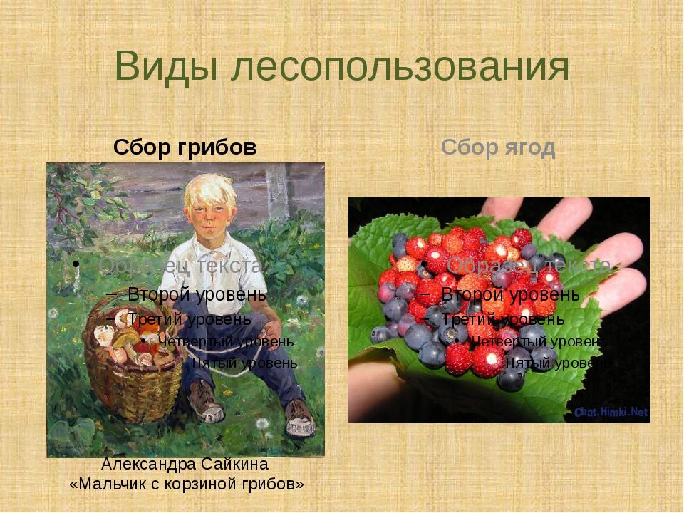 Виды лесопользования Сбор грибов Сбор ягод Александра Сайкина «Мальчик с корз...