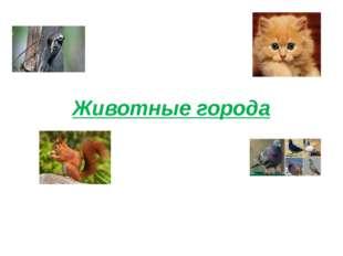 Животные города