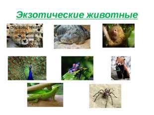 Экзотические животные