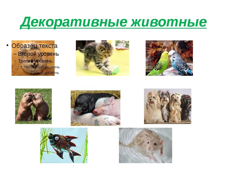 Декоративные животные
