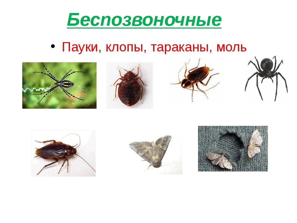 Беспозвоночные Пауки, клопы, тараканы, моль