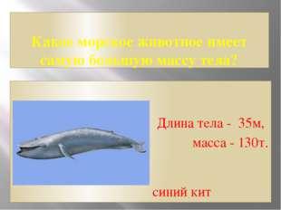 Какое морское животное имеет самую большую массу тела? Длина тела - 35м, масс