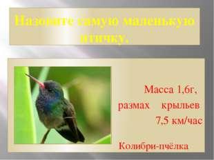 Назовите самую маленькую птичку. Масса 1,6г, размах крыльев 7,5 км/час Колибр