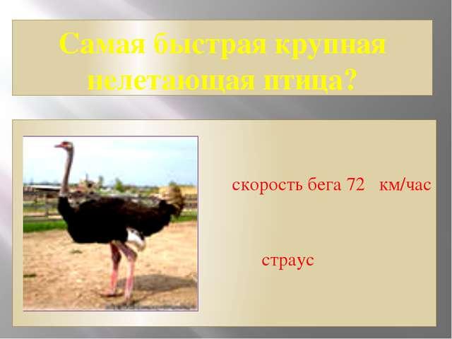 Самая быстрая крупная нелетающая птица? скорость бега 72 км/час страус