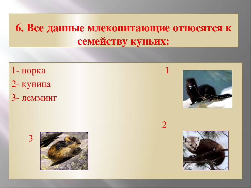 6. Все данные млекопитающие относятся к семейству куньих: 1- норка 1 2- куниц...