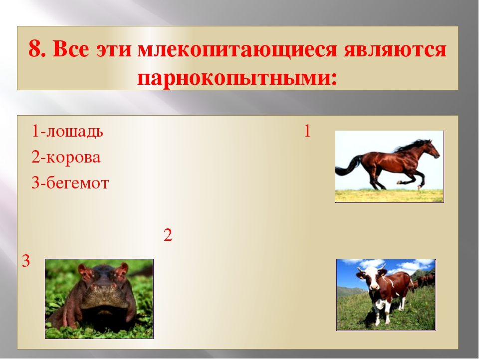8. Все эти млекопитающиеся являются парнокопытными: 1-лошадь 1 2-корова 3-бег...