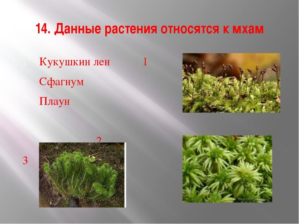 14. Данные растения относятся к мхам Кукушкин лен 1 Сфагнум Плаун 2 3