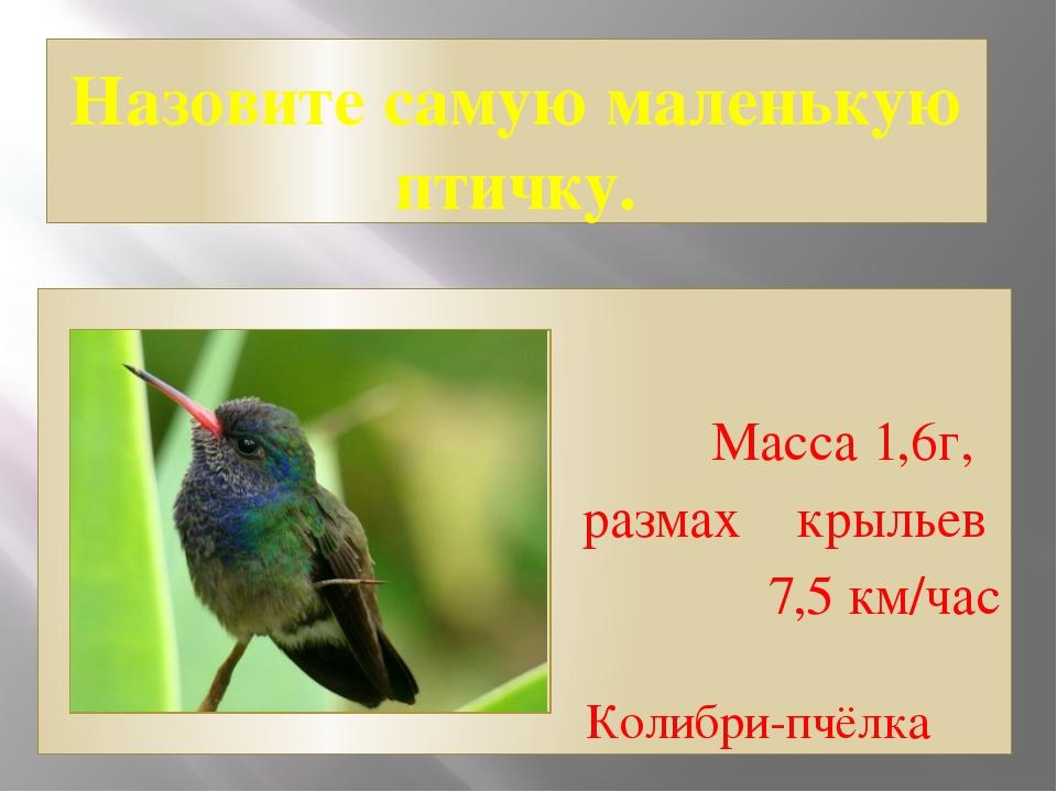Назовите самую маленькую птичку. Масса 1,6г, размах крыльев 7,5 км/час Колибр...