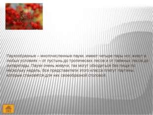 Литература 1. Н.Ф. Виноградова Окружающий мир 2 класс. Часть 2. Вентана – Гра