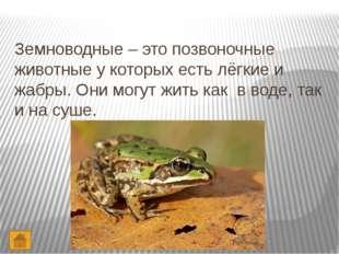 Интернет – ресурсы. http://images.yandex.ru – червь http://images.yandex.ru –