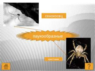 земноводные тритон лягушка