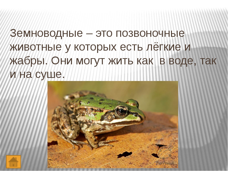 Интернет – ресурсы. http://images.yandex.ru – червь http://images.yandex.ru –...