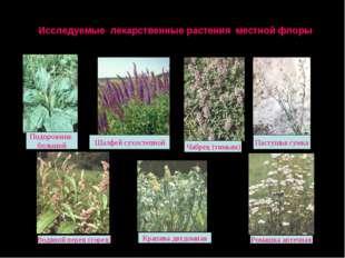 Исследуемые лекарственные растения местной флоры Чабрец (тимьян) Ромашка апте