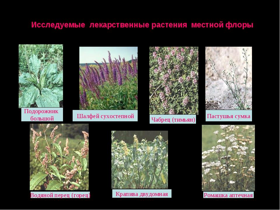 Исследуемые лекарственные растения местной флоры Чабрец (тимьян) Ромашка апте...