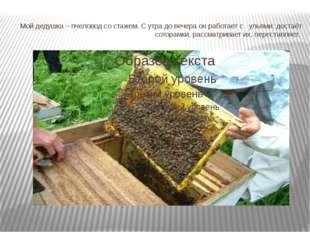 Мой дедушка – пчеловод со стажем. С утра до вечера он работает с ульями: дост