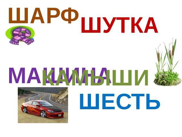 ШАРФ ШУТКА МАШИНА КАМЫШИ ШЕСТЬ