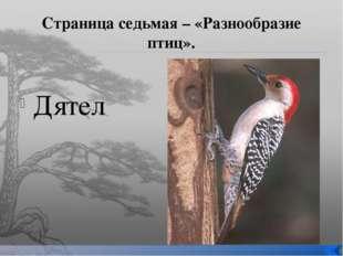 Страница седьмая – «Разнообразие птиц». Дятел