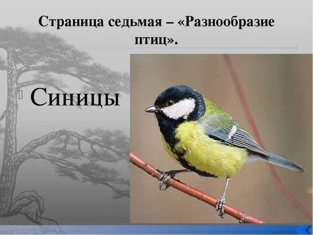 Страница седьмая – «Разнообразие птиц». Синицы