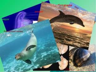 рапан медуза Морские обитатели краб мидия Морской конёк Морская игла дельфин