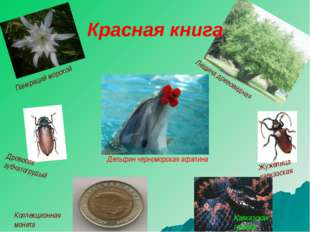 Дровосек зубчатогрудый Жужелица кавказская Кавказская гадюка Коллекционная мо
