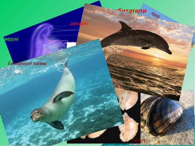 рапан медуза Морские обитатели краб мидия Морской конёк Морская игла дельфин...