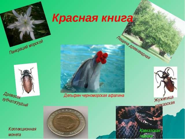 Дровосек зубчатогрудый Жужелица кавказская Кавказская гадюка Коллекционная мо...