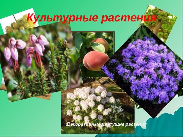 персик инжир орех абрикос Декоративные цветущие растения Культурные растения