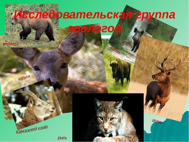олень рысь зубр косуля кабан Кавказский козёл медведь Исследовательская групп...