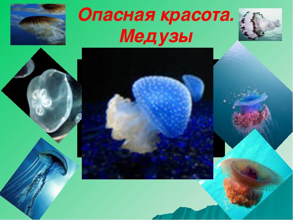 Опасная красота. Медузы