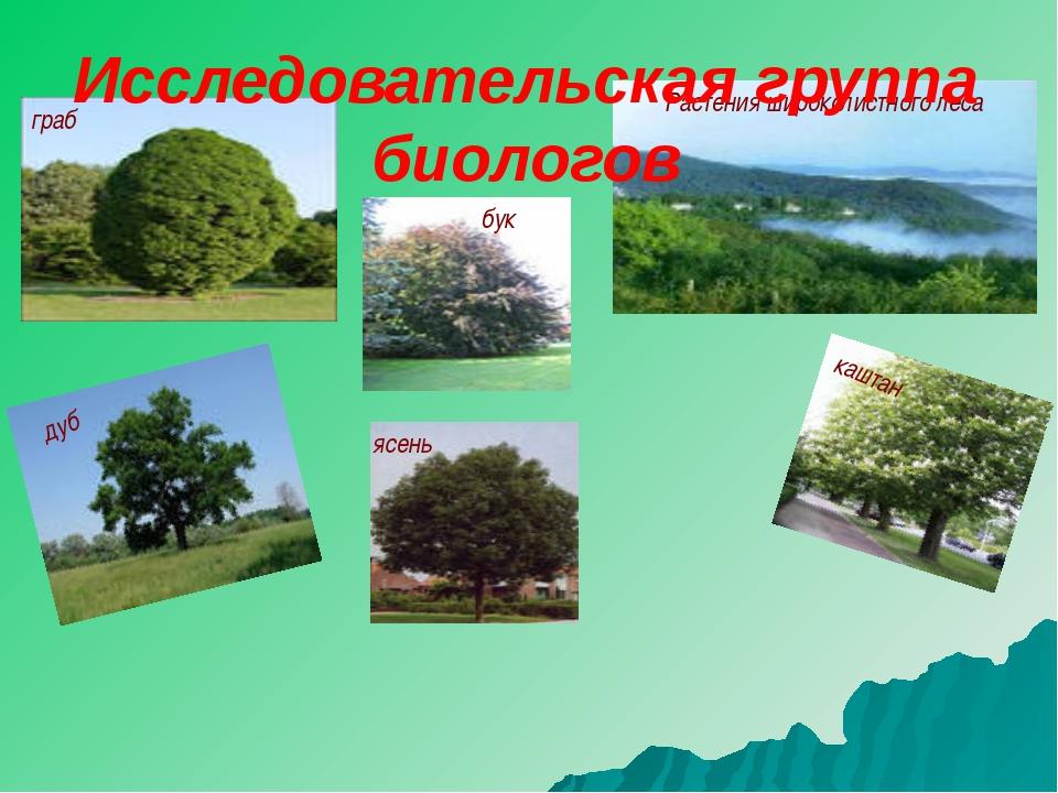 Растения широколистного леса дуб граб бук ясень каштан Исследовательская груп...