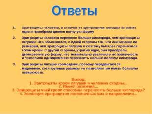 Эритроциты человека, в отличие от эритроцитов лягушки не имеют ядра и приобре