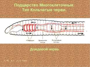 Подцарство Многоклеточные. Тип Кольчатые черви. Дождевой червь С. 80 а. 1 ст.