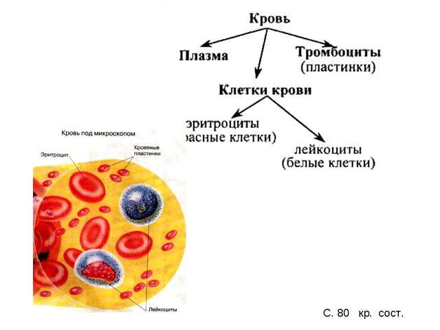 С. 80 кр. сост.