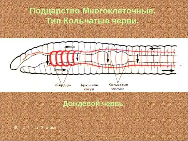Подцарство Многоклеточные. Тип Кольчатые черви. Дождевой червь С. 80 а. 1 ст....