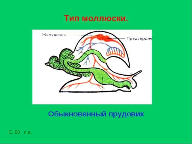 Тип моллюски. Обыкновенный прудовик С. 80 п.а.