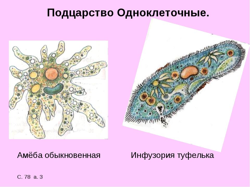 Подцарство Одноклеточные. Амёба обыкновенная Инфузория туфелька С. 78 а. 3