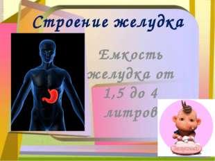 Строение желудка Емкость желудка от 1,5 до 4 литров
