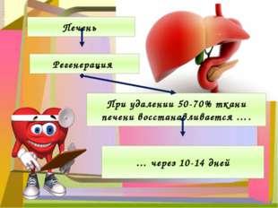 Печень Регенерация При удалении 50-70% ткани печени восстанавливается …. … че
