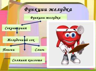 Функции желудка Функции желудка Желудочный сок Секреторная Пепсин Слизь Солян