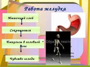 Работа желудка Мышечный слой Сокращается Импульсы в головной мозг Чувство гол
