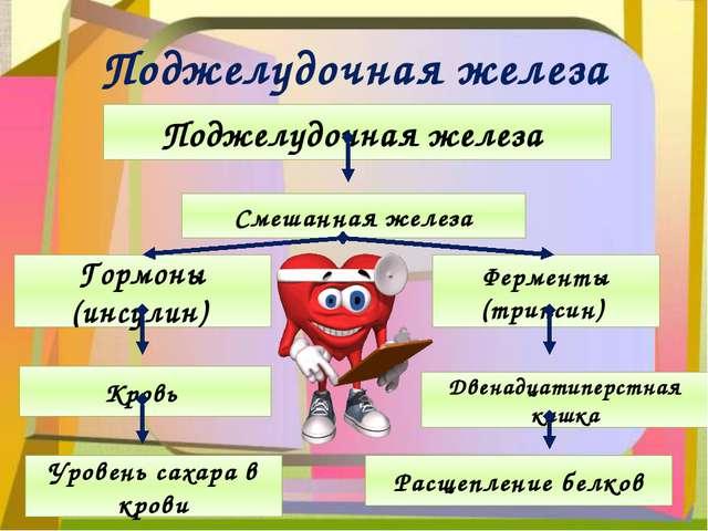 Поджелудочная железа Поджелудочная железа Смешанная железа Ферменты (трипсин)...
