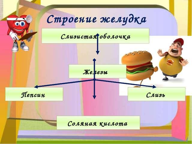 Строение желудка Слизистая оболочка Железы Пепсин Соляная кислота Слизь