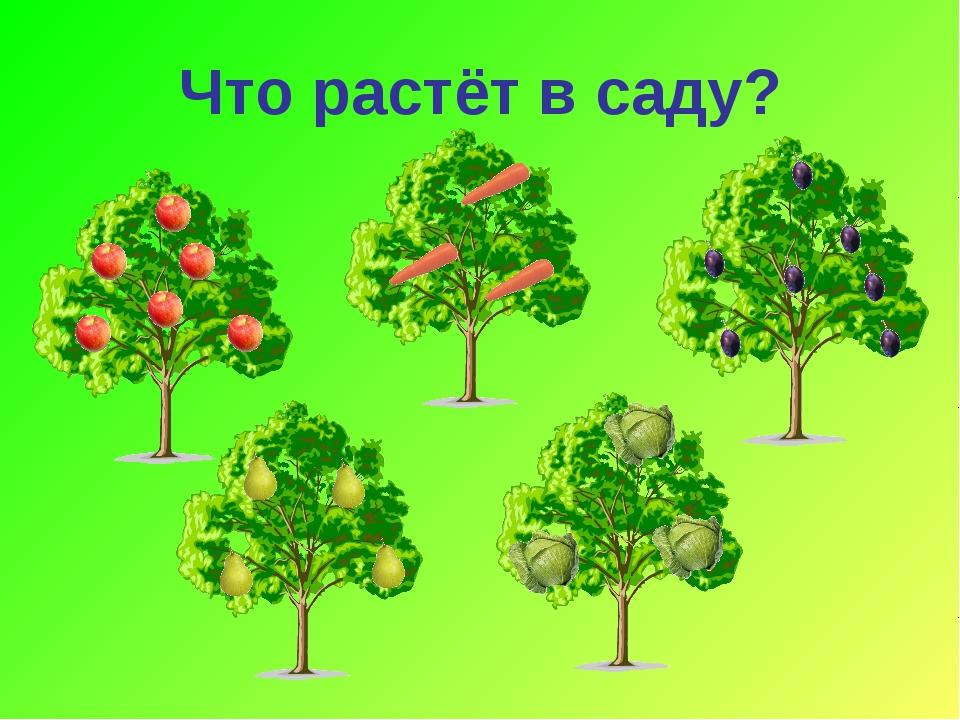 Что растёт в саду?