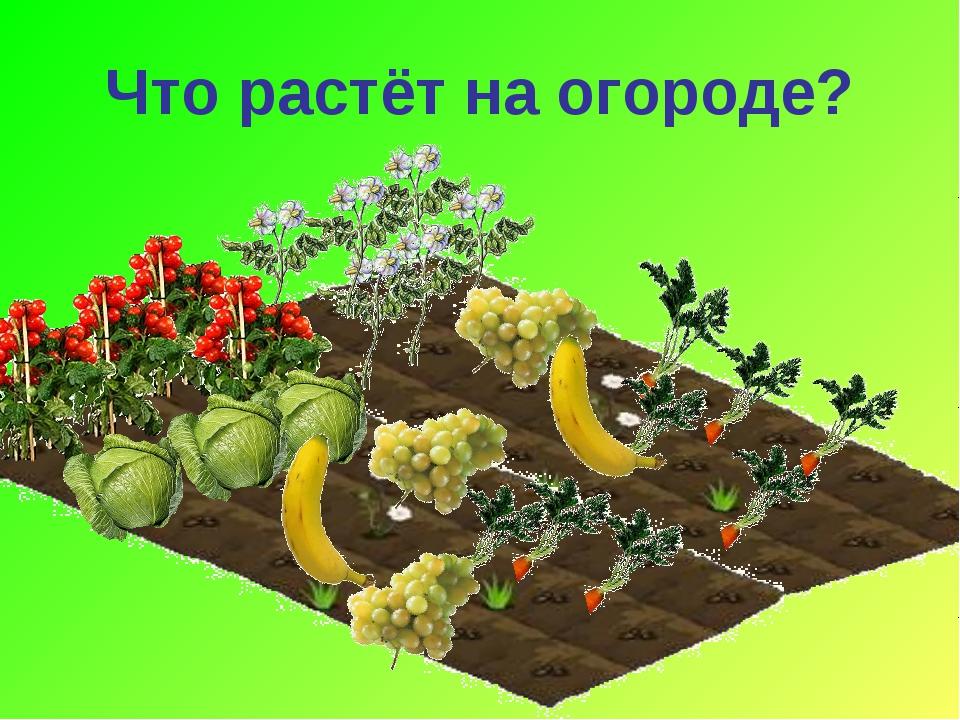 Что растёт на огороде?